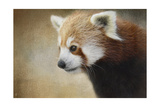 Red Panda Watching Lámina giclée por Jai Johnson
