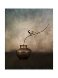 Black Capped Chickadee on a Vase Reproduction procédé giclée par Jai Johnson