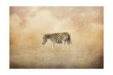 Indian Summer Zebra Giclee Print by Jai Johnson