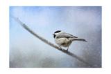 Chickadee in the Snow Reproduction procédé giclée par Jai Johnson