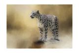 Snow Leopard Giclee Print by Jai Johnson
