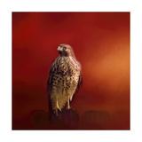 Hawk on a Hot Day Stampa giclée di Jai Johnson