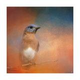 Summer Day Bluebird Giclée-tryk af Jai Johnson