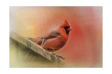 Rooftop Visitor Cardinal