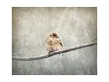 Sparrow Braving the Cold Reproduction procédé giclée par Jai Johnson