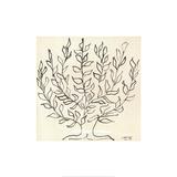 Le Platane Affiches par Henri Matisse