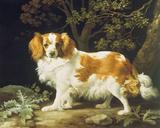King Charles Spaniel Giclée-tryk af George Stubbs