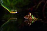 Uden titel Fotografisk tryk af Shikhei Goh