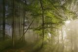 Morning Beauty Fotografisk trykk av Norbert Maier