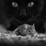 Black Breakfast Fotografisk tryk af Francois Casanova