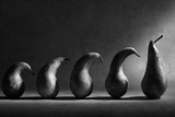 The Evolution Reproduction photographique par Victoria Ivanova