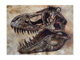 Tyrannosaurus Rex Dinosaur Skull Poster di Stocktrek Images