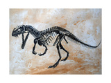Ceratosaurus Dinosaur Skeleton Stampe di Stocktrek Images