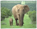 Mother and Calf, African Elephant (Loxodonta Africana), Addo National Park, South Africa, Africa Fleece Blanket by Ann & Steve Toon