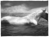 White Horse Swimming Fleece Blanket by Tim Lynch