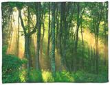 Sunbeams Through the Trees Fleece Blanket