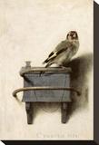 The Goldfinch, 1654 Opspændt lærredstryk af Carel Fabritius