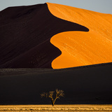 Africa, Namibia, Namib Naukluft National Park. Abstract of Sand Dune Fotografisk tryk af Jaynes Gallery