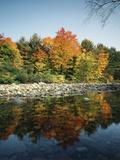 Vermont, Autumn Colors of Sugar Maple Trees Along a Stream Fotografisk trykk av Christopher Talbot Frank