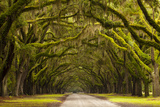 USA, Georgia, Savannah, Oak Lined Drive at Wormsloe Plantation Reproduction photographique par Joanne Wells