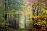 Brocéliande colored forest Fotografisk trykk av Philippe Manguin