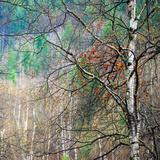 Kootenay Spring Fotografisk trykk av Ursula Abresch