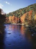 New Hampshire, White Mts Nf, Sugar Maples and Wild Ammonoosuc River Fotografie-Druck von Christopher Talbot Frank