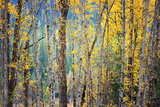 Kootenay Fall 4 Reproducción de lámina sobre lienzo por Ursula Abresch