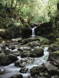 Hawaii, Maui, a Waterfall Flows into Blue Pool from the Rainforest Fotografisk trykk av Christopher Talbot Frank