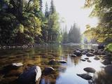 New York, Adirondack Mts, Fall Trees Alond a Stream Fotografie-Druck von Christopher Talbot Frank