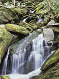 Tennessee, Great Smoky Mts National Park, Waterfalls Along Roaring Fork Stream Fotografisk trykk av Christopher Talbot Frank