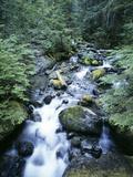 Strathcona Park, Vancouver Island, a Creek Flowing in the Rainforest Fotografisk trykk av Christopher Talbot Frank