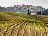 Italy, Tuscany. Colorful Vineyards in Fall in the Val Dorcia Stretched Canvas Print by Julie Eggers