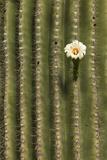 Arizona, Tucson, Tucson Mountain Park Photographic Print by Peter Hawkins