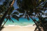 Anse Maquereau, Fregate Island, Seychelles Fotografisk tryk af Sergio Pitamitz