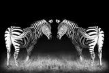 Black and White Mirrored Zebras Fotografisk tryk af Sheila Haddad