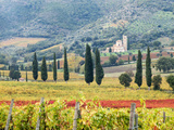 Italy, Tuscany. Vineyard and Olive Trees with the Abbey of Sant Antimo Lámina fotográfica por Julie Eggers