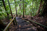 Rainforest Path, Southern Dominica, West Indies Reproduction photographique par Susan Degginger