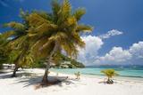 Great Harbor, Jost Van Dike, British Virgin Islands Photographic Print by Susan Degginger