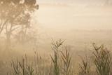 Australia, Victoria, Yarra Valley, Healesville, Field with Fog, Dawn Stampa fotografica di Walter Bibikow