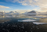 Antarctica, Near Adelaide Island. the Gullet. Ice Floes at Sunset Photographic Print by Inger Hogstrom