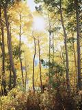 California, Sierra Nevada, Inyo Nf, Suns Rays Through Autumn Aspens Fotografie-Druck von Christopher Talbot Frank