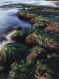California, San Diego, Waves Crash on Eel Grass Covered Rocks Fotografisk trykk av Christopher Talbot Frank