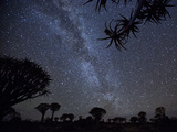 Africa, Namibia. Milky Way and Quiver Trees at Night Fotoprint van Jaynes Gallery