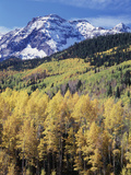 Colorado, Rocky Mts, Aspen Trees Below a Mountain Peak in Fall Fotografisk trykk av Christopher Talbot Frank