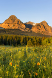 Wildflowers in the Cut Bank Valley of Glacier National Park, Montana, USA Stampa fotografica di Chuck Haney