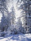 California, Cleveland Nf, Laguna Mts, Winter Sunrise in Forest Fotografisk trykk av Christopher Talbot Frank