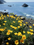 California, Big Sur Coast, Central Coast, California Poppy Fotografie-Druck von Christopher Talbot Frank