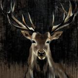Young Buck Posters af Liz Jardine