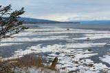 Lonely Tree Overlooking Frozen Tidal Flats Fotografisk trykk av Latitude 59 LLP